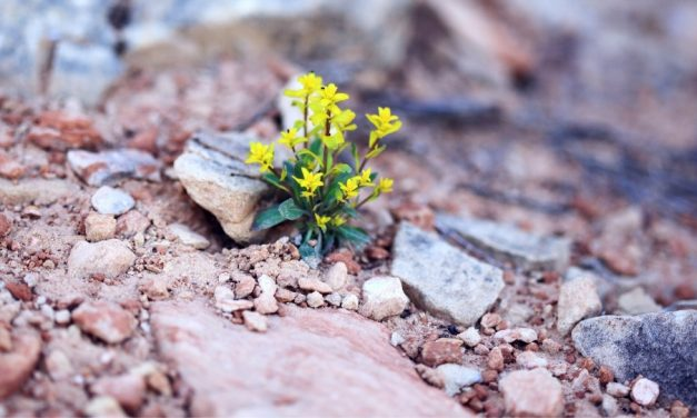 HOW CAN GOD'S PLAN OF HAPPINESS HELP US UNDERSTAND DEATH BETTER?